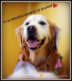 """To Be Beautiful is to Be Yourself""... Sugar, the Golden Retriever"