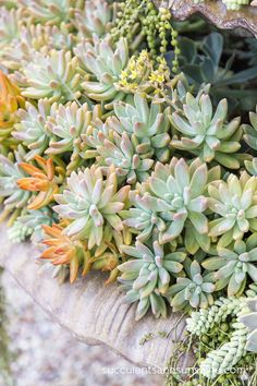 Detail Photos from Jeanne Meadow's Garden - Succulents and Sunshine This.