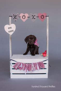 Puppy kissing booth, pet photography, pet portraits, Labradinger, Hundred Thousand Fireflies Photography