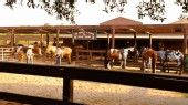 Tri-Circle-D Ranch! We love the trail ride there!