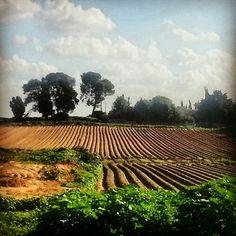 Strawberry field, Israel. Osi Gilboa