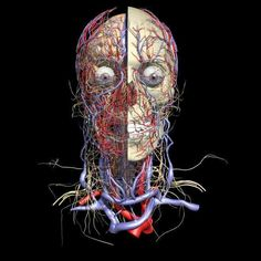 Web Anatomy from University of Minnesota - Cardiovascular System | Variety of self quizzes