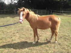 Transform an animals life forever and explore the range of cats, kittens, puppies, dogs and more looking for a loving home near you today. Rescue Dogs, Animal Rescue, Welsh Pony, Search And Rescue, 4 Years, Kittens, Adoption, Puppies, Horses