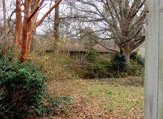 View of spacious backyard