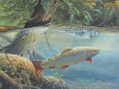 Larry Tucci - Out For a Look, Brook Trout