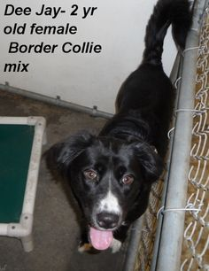 ***SUPER URGENT!!!*** - PLEASE SAVE ME!! - EU DATE: 7/28/2014 -- dee jay sweet  Breed: Border Collie (mix breed) Age: Young adult Gender: Female  Size: Medium,  hasShots - ,,,,,Silvia is 910-876-0539 and Debbie is 339-832-0806. If Silvia's mailbox is full you can Text her. Transportation is generally available up and down the East Coast from NC, VA, MD, NJ, PA, NY and the North East.
