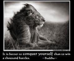 true love quote with lion   wisdom quotes lion 150x150 Wisdom Quotes