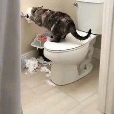 Cats are so funny you will die laughing - Funny cat compilation - Funny Animal Videos, Cute Funny Animals, Cute Baby Animals, Animals And Pets, Cute Cats, Funny Cats And Dogs, Cats And Kittens, Pet Dogs, Dog Cat