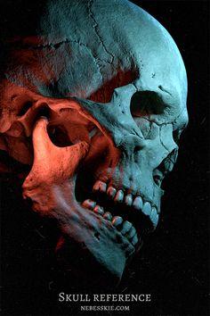 Skull reference images pack: 9 lighting schemes 19 angles of the skull Resolutio. Skull Tattoo Design, Skull Design, Skull Tattoos, Art Tattoos, Skull Reference, Reference Images, Pose Reference, Skull Hand, Cow Skull