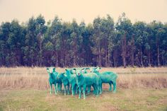gray malin the dream series rainbow sheep