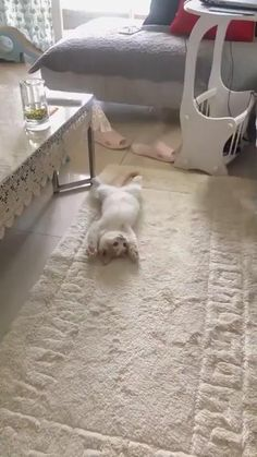 Funny Cute Cats, Cute Baby Cats, Cute Cats And Kittens, Cute Funny Animals, Kittens Cutest, Cute Wild Animals, Cute Little Animals, Cute Animal Videos, Funny Animal Pictures