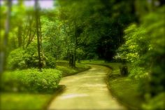 follow the yellow brick road by Tim Ernst on 500px