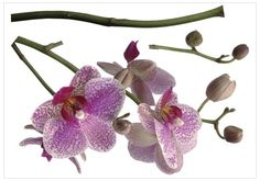 Brewster Komar FS17702 Peel  Stick Orchids European Wall Decals ** Continue to the product at the image link.Note:It is affiliate link to Amazon.