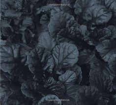 Amazon.com: Black Plants: 75 Striking Choices for the Garden (9780881929812): Paul Bonine: Books