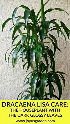 27 Best Keep Your Houseplants Alive Images In 2019 Houseplants