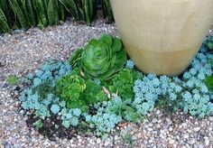 succulents around the base of a pot How beautiful !