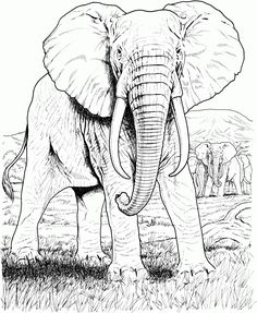 Desenho realista de um elefante