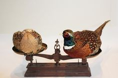 Items similar to Bespoke Taxidermy Pair of Pheasants on Vintage Kitchen Scales on Etsy Kitchen Scales, Pheasant, Taxidermy, Vintage Kitchen, Bespoke, Bookends, Unique Jewelry, Handmade Gifts, Etsy