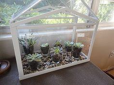 miniature garden ikea glasshouse ideas pinterest. Black Bedroom Furniture Sets. Home Design Ideas