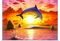 Dolphins 🐬 After research reveals dolphins have extraordinary intellects and emotional IQs. Beautiful Creatures, Animals Beautiful, Cute Animals, Orcas, Dolphin Art, Bottlenose Dolphin, Ocean Wallpaper, Wale, Ocean Creatures