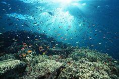 Onderwater leven