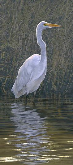 Great Egret - Wildlife painting by Scot  Storm