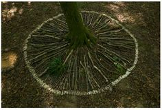 land art around a tree