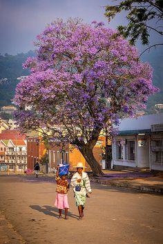 Un dimanche matin à Fianarantsoa,  ville située au centre de l'île entre monts découpés et verts du Betsiléo, capitale malgache du vin dont les cépages ont été importés de France et de Suisse. Excellent !