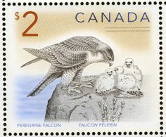 Peregrine Falcon stamps - mainly images - gallery format Canada, American Words, Peregrine Falcon, Postage Stamp Art, Penny Black, Stamp Collecting, Mail Art, Science Nature, Bird