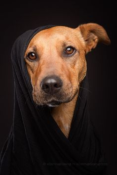 Photograph Mutts in mufflers - Jasira by Elke Vogelsang on 500px