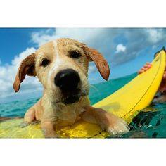 ¿Hacemos un poco de #surf? #playa #perros #fotos