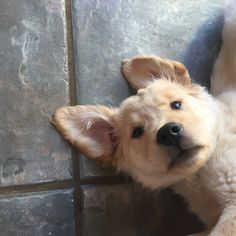 Fed onto Cute dogs Album in Animals Category Animals And Pets, Baby Animals, Funny Animals, Cute Animals, Cute Dogs And Puppies, Doggies, Mundo Animal, Cute Creatures, Happy Dogs