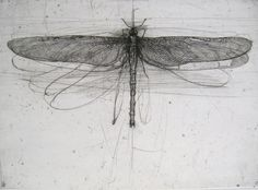 Lanfranco Quadrio (Italian, b.1966). Dragonfly with large wings, 1997 engraving.
