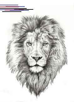Rock Eagle Herren T-Shirt Schwarz Proud Wild Lion Löwe Leon Glow in the Dark