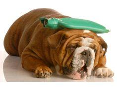 c5d889751807 Traga seu animalzinho para o Veterinário Brooklin, aqui realizamos exames,  acompanhamentos, curirgias e
