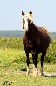 Went Chincoteague Pony hunting yesterday. Found Surfer Dudes Riptide on the northern side of Assateague in Virginia.