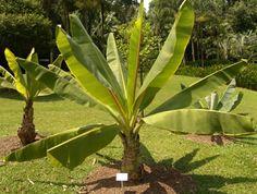 plante exotique non gelive