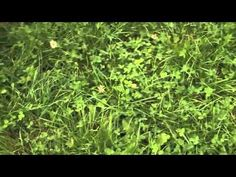 EBLEX BRP grassland management guide: Measuring grass growth