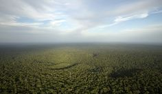 Rate of environmental degradation puts life on Earth at risk, say scientists. Humans are 'eating away at our own life support systems' at a rate unseen in the past years, two new research papers say Sequoia Sempervirens, Richard Powers, Environmental Degradation, Environmental Education, Environmental Issues, World Economic Forum, Amazon Rainforest, Fauna, Climate Change