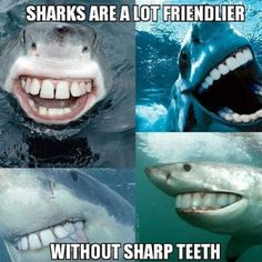 Sharks seem a lot friendlier without sharp teeth.