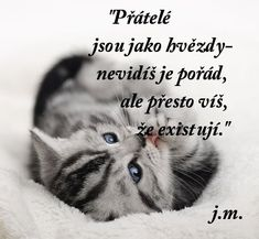 Výsledek obrázku pro Daria C. Dog Quotes, Art Journal Pages, True Friends, Love Is Sweet, In My Feelings, Motto, The Dreamers, Quotations, Bff