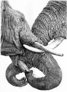 Black and white nature commended: Tembo Tango by Karen E Phillips - © Karen E Phillips