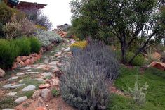 Colorful Path on steep slope
