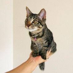 片手に乗ったこはる #猫 #こはる