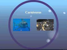 Vídeo enriquecido por Sergio Cabanillas (Grupo A) con eduCanon sobre las Relaciones alimentarias de los seres vivos.