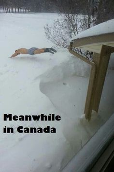Spring Humor in Canada: Oh man first off, that would be SO much less soft than he thinks it is.second, is that from the roof of a house? That's a LOT of snow. Canadian Memes, Canadian Things, I Am Canadian, Canadian Humour, Canadian Bacon, Canada Jokes, Canada Funny, Canada Eh, Swimming Funny