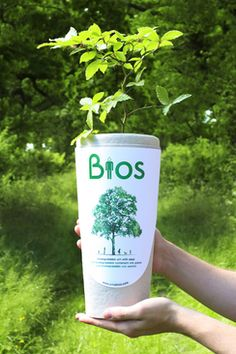 Het product - Bios Urn - biologisch afbreekbare urn kopen - Bio Urn Nederland