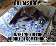 Ugh my cat this to me snd my puzzle. .. was so pissed