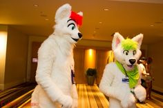 Late #FursuitFriday Does this fox make me look short? Other floofy doof is @toastedwheet