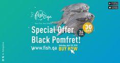 Buy Fresh Black Pomfret Fish Big Online anywhere from Qatar. We deliver high quality Black Pomfret Fish Big daily. Business Card Template Photoshop, Big Black, Fish, Templates, Detail, Cards, Stencils, Pisces, Vorlage